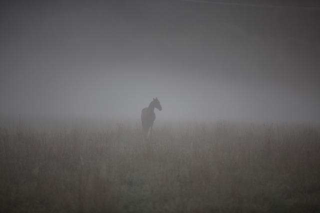 kůň v mlze